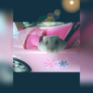 ratatouille hamster concours photo animaux octobre 2017