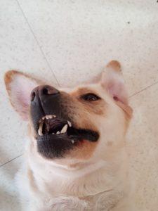 jazzy-chien-concours-photo-animaux-decembre-2017