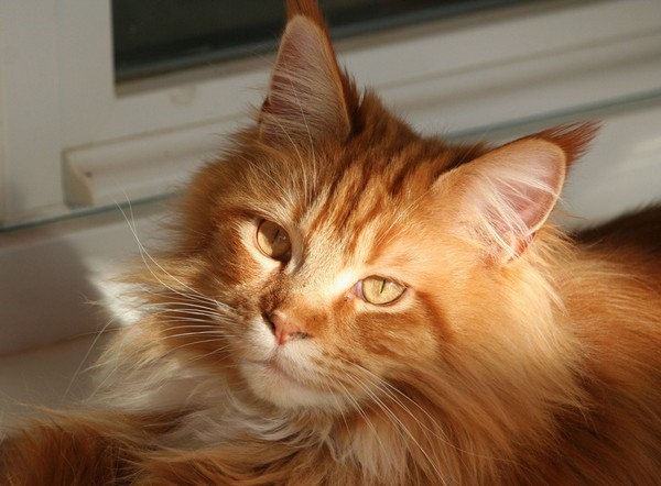 many-chat-concours-photo-animaux-mars-2018