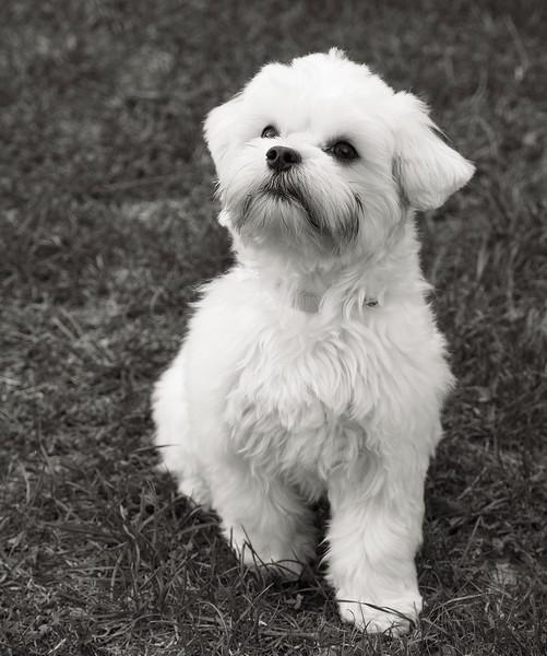 eden2-chien-concours-photo-animaux-avril-2018