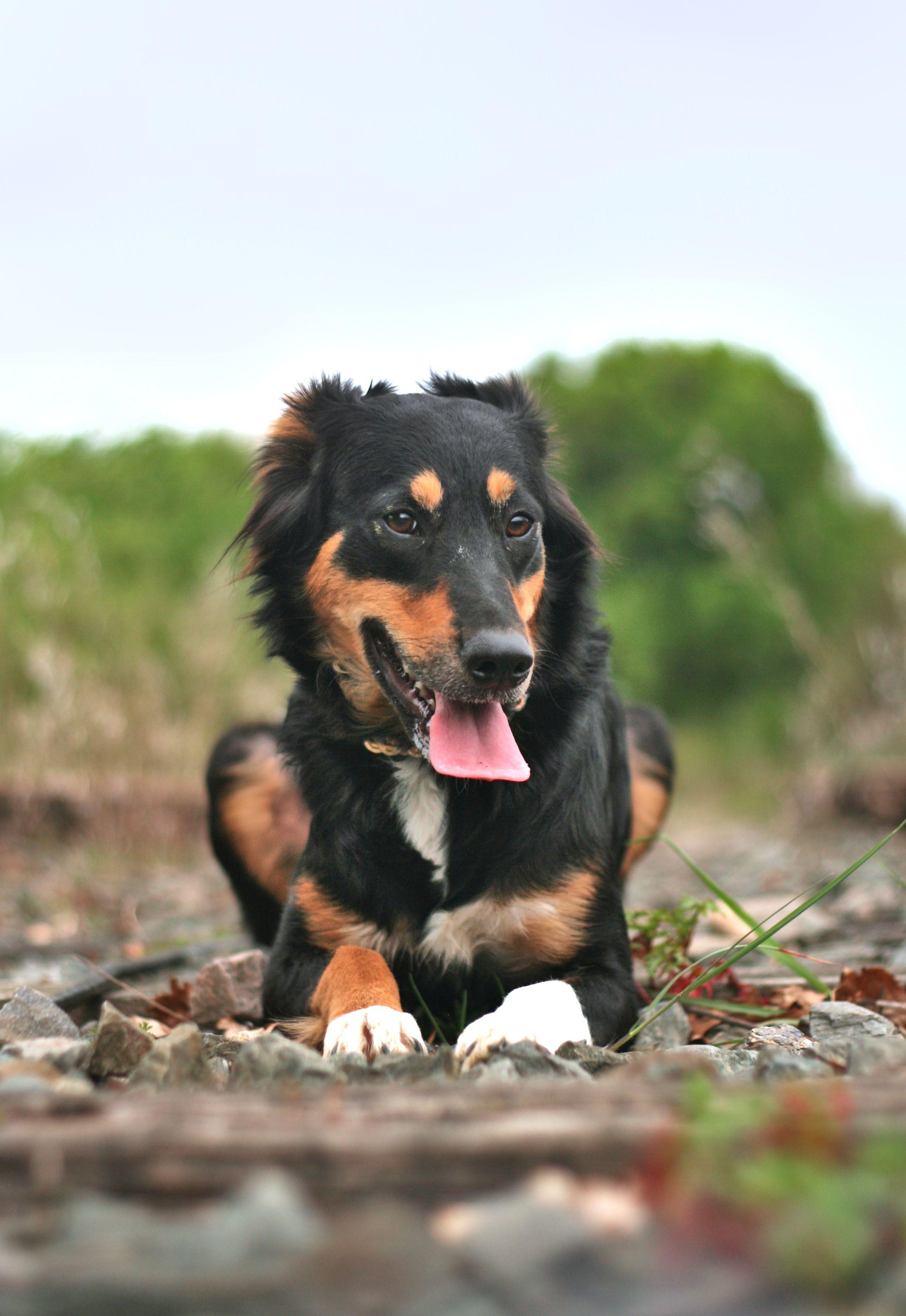 kallya-chien-concours-photo-animaux-mai-2019