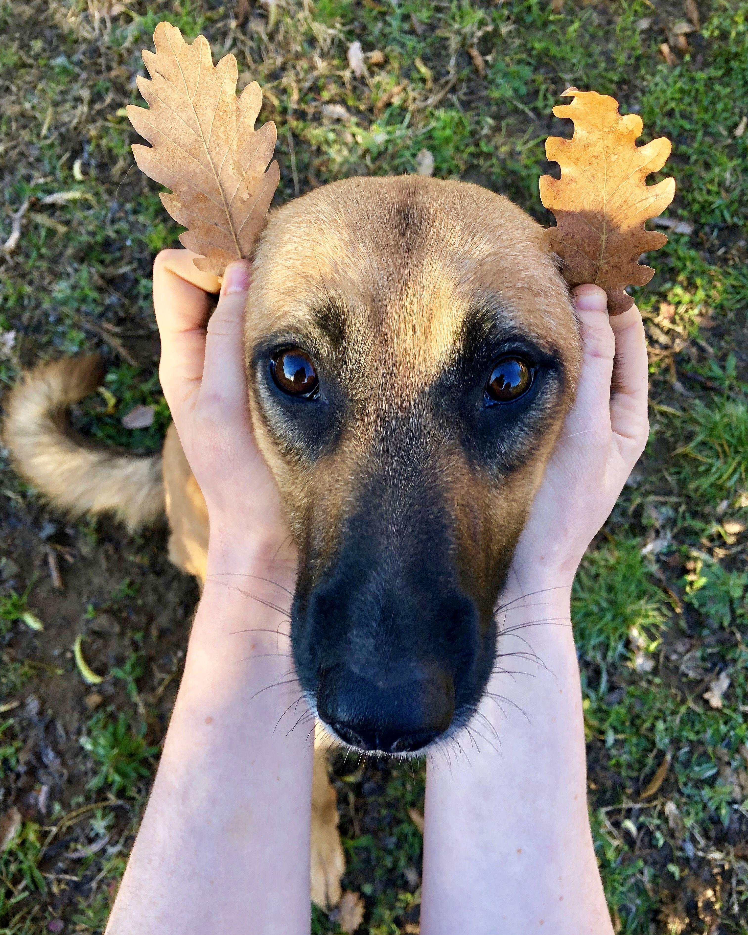 diesel-chien-concours-photo-animaux-octobre-2019