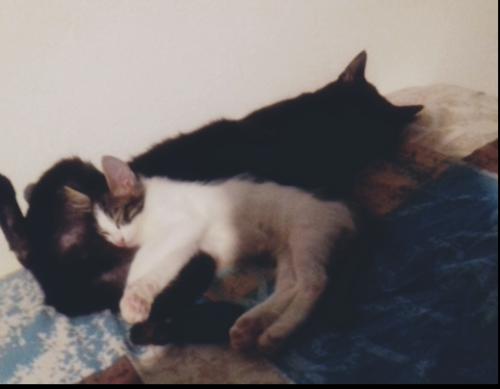 Adonis et Saphir