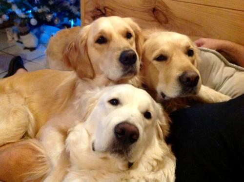 Enzo, Nala et Polly