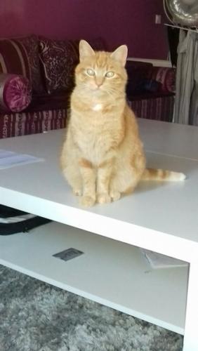 Garfield Minou