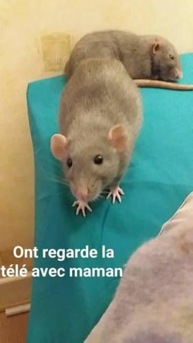 Louna et Ratatouille