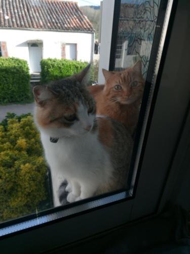 Max et Minette
