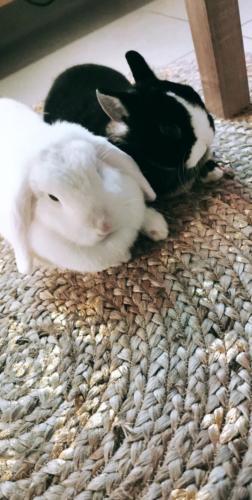 Oreo et Sylla