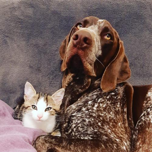 Paco et Nouky