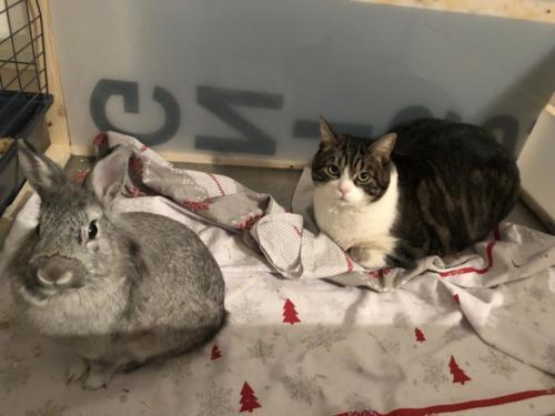 Perle et Cookie